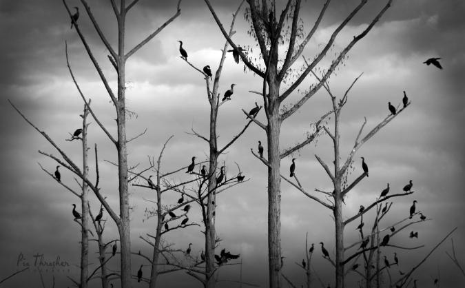 BWDAYSMbirdsintreesclose